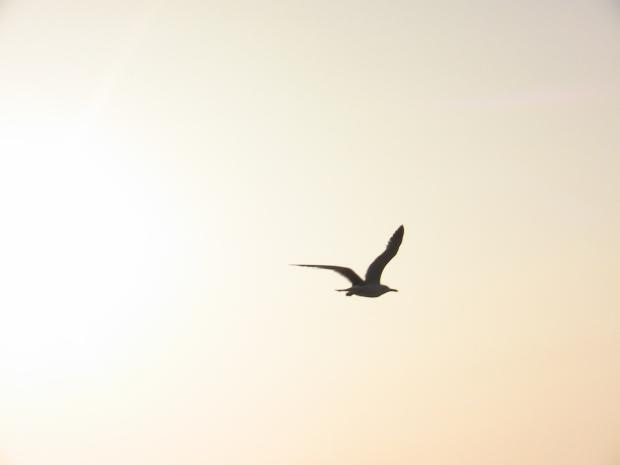 free ad a bird